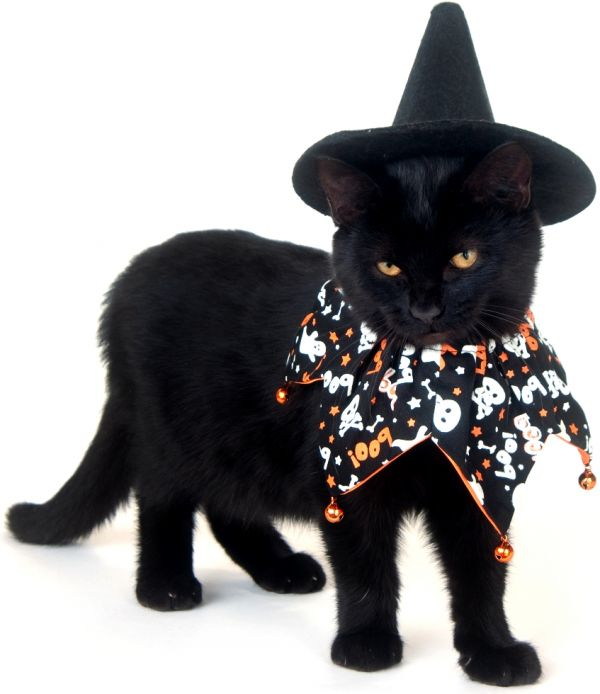 Halloween Cat Costumes For CatsCat Costume For Cats