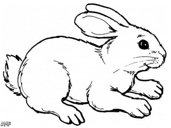 baby bunny coloring pages printable - photo#31